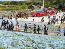 日立海滨公园,茨城,日本 免版税图库摄影