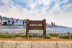 日立海滨公园 免版税库存照片