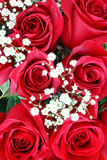 日红色玫瑰华伦泰 免版税库存照片