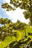 日绿色叶子 免版税库存图片