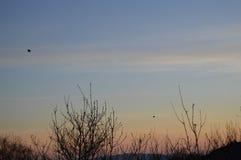 日落、树和鸟 免版税库存照片