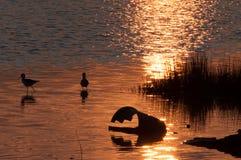 日落、鸟在水中和残破的桶 免版税图库摄影