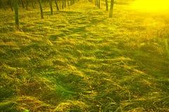日落光的秋天森林。 库存图片