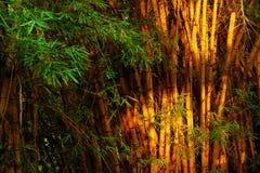 日落光的竹森林在Tayrona国家公园 库存照片