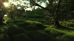 日落光芒的冰岛泥煤似教会  安德列耶夫 股票视频