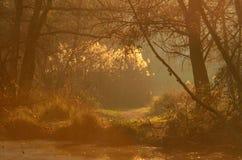 日落光芒的湖 免版税库存照片