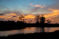 日落剪影的反射在柏的陷入沼泽 库存照片