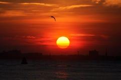 日落和一只海鸥在查尔斯顿,南卡罗来纳 免版税库存图片