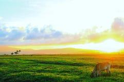 日落和云彩在天际 库存照片