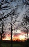 日落和天空在赤裸树后 库存照片