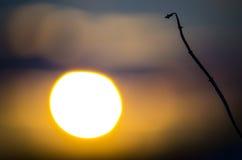 日落和干草秸杆 库存照片