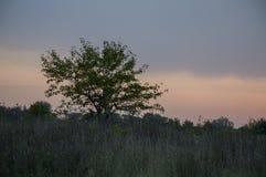 日落和日出 紫色紫罗兰色天空和覆盖 偏僻的树剪影在天堂背景的黑暗的草甸  免版税库存图片