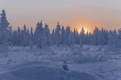 日落和日出 33c 1月横向俄国温度ural冬天 树橙色天空和剪影在天堂背景的  冷淡的晚上,雪arou 库存照片