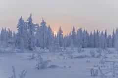 日落和日出 33c 1月横向俄国温度ural冬天 树橙色天空和剪影在天堂背景的  冷淡的晚上,雪arou 库存图片