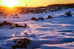 日落和明亮的冬天太阳在森林 免版税库存照片