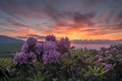 日落和杜鹃花绽放 图库摄影