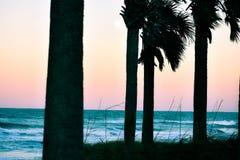 日落和棕榈树在黄昏沿海佛罗里达海滩在庞塞进和奥蒙德海滩,佛罗里达 免版税库存图片