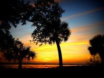 日落和棕榈树沿海乔治亚 免版税库存图片