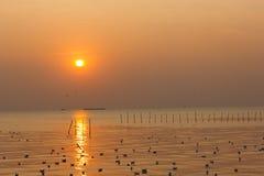 日落和海鸥 免版税库存图片
