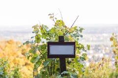 日落和空白的委员会的美丽的葡萄园在一个夏日 免版税库存照片