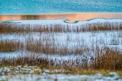 日落和芦苇的湖在冬天 免版税库存图片