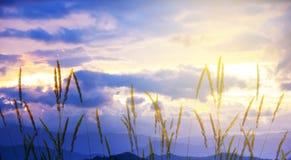 日落和草banne 免版税图库摄影