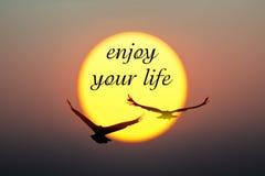 日落和鸟与享受您的生活文本 免版税库存图片
