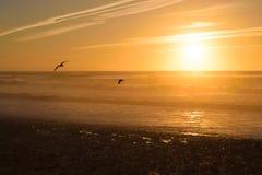 日落和鸟在海滩,摩洛哥 免版税库存图片
