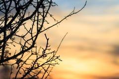 日落和黑色不生叶的树sihouette 免版税库存图片