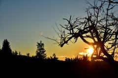 日落和结构树 图库摄影
