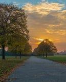 日落在与排行道路的金黄树的秋天 库存图片