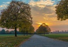 日落在与排行道路的金黄树的秋天 免版税图库摄影