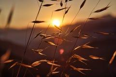 日落在从圣加布里埃尔山的加利福尼亚 库存图片