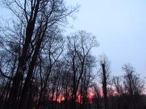 日落在公园 库存照片