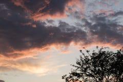 日落在公园 免版税库存照片