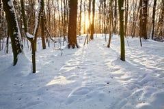 日落在冬天森林里。 库存图片