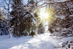 日落在冬天森林里 免版税库存照片