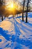 日落在冬天森林里 图库摄影