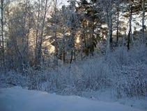 日落在冬天森林里 免版税库存图片