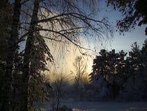 日落在冬天森林里 库存图片