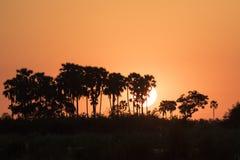 日落在博茨瓦纳非洲 库存照片