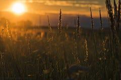 日落在哈萨克斯坦 库存照片