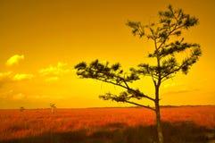 日落在大草原 库存照片