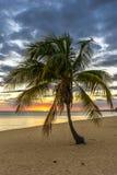 日落在天堂,在海滩的棕榈树 库存照片