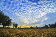 日落在山和玉米田 库存照片