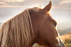 日落在山自然背景中 在夏天草甸的马 免版税库存图片