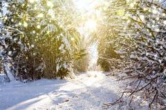 日落在德国冬天森林和降雪里 库存照片