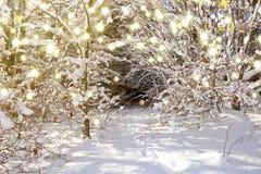 日落在德国冬天森林和降雪里 免版税库存照片