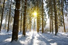 日落在德国冬天森林里 库存照片