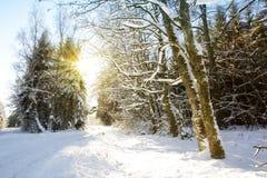 日落在德国冬天森林里 免版税图库摄影